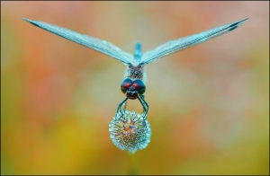 dragonfly_with_diamonds_by_zulus77-d5v4cx1